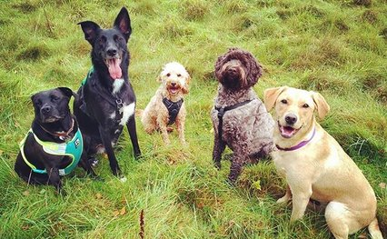Best Doggy Daycare in Reigate