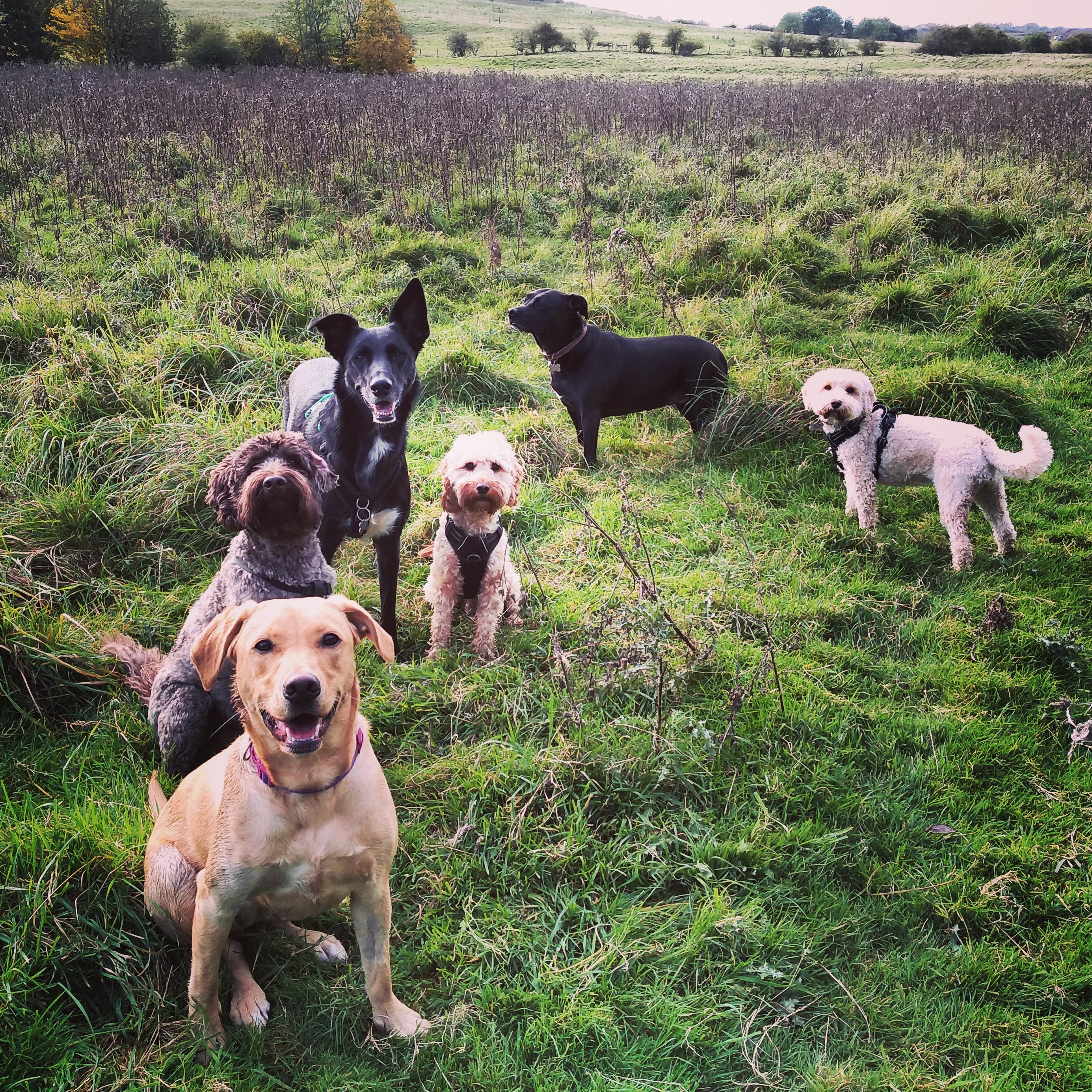 best Doggy Daycare in Redhill Surrey