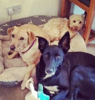 Doggy Daycare in Redhill Surrey